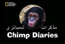 مذكرات شمبانزي