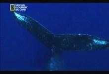 صورة ألغاز الحيتان الحدباء