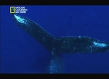 ألغاز الحيتان الحدباء