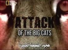 خاص : قطط كبيرة ـ هجوم القطط الكبيرة