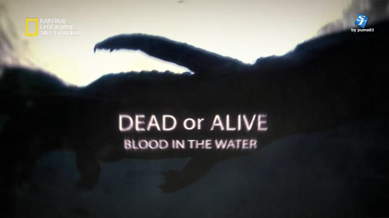 حيّ أم ميت HD : دماء في الماء - موقع علوم العرب