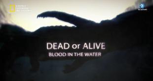 حيّ أم ميت HD : دماء في الماء