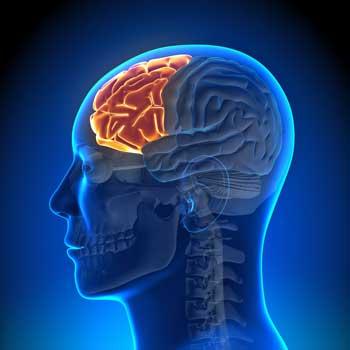 منطقة الفص الجبهي في الدماغ
