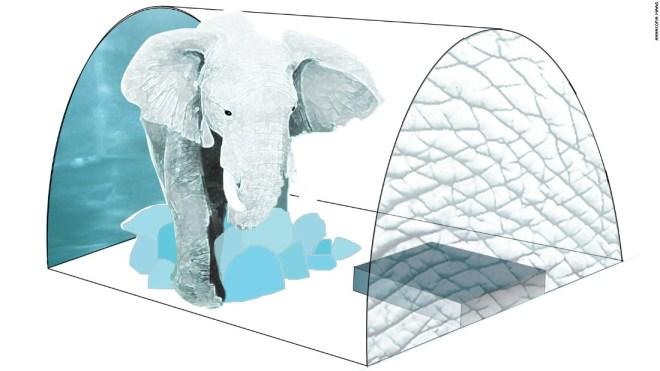 فيلة أفريقية منحوتة من الجليد