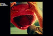 صورة أسماك مخيفة HD : القرش النهري