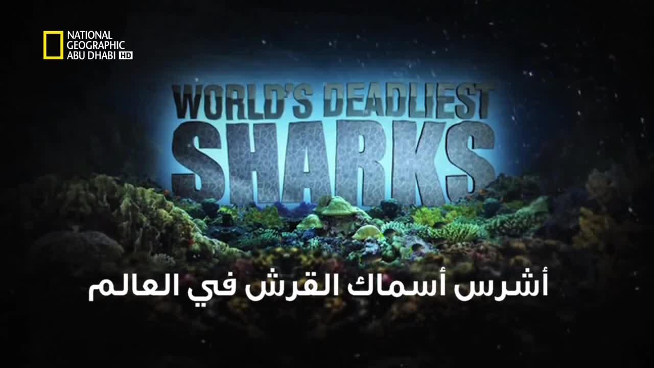 خاص القروش HD : أشرس أسماك القرش في العالم - موقع علوم العرب