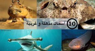 مقال - 10 أسماك مذهلة و غريبة