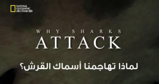 خاص القروش : لماذا تهاجمنا أسماك القرش ؟