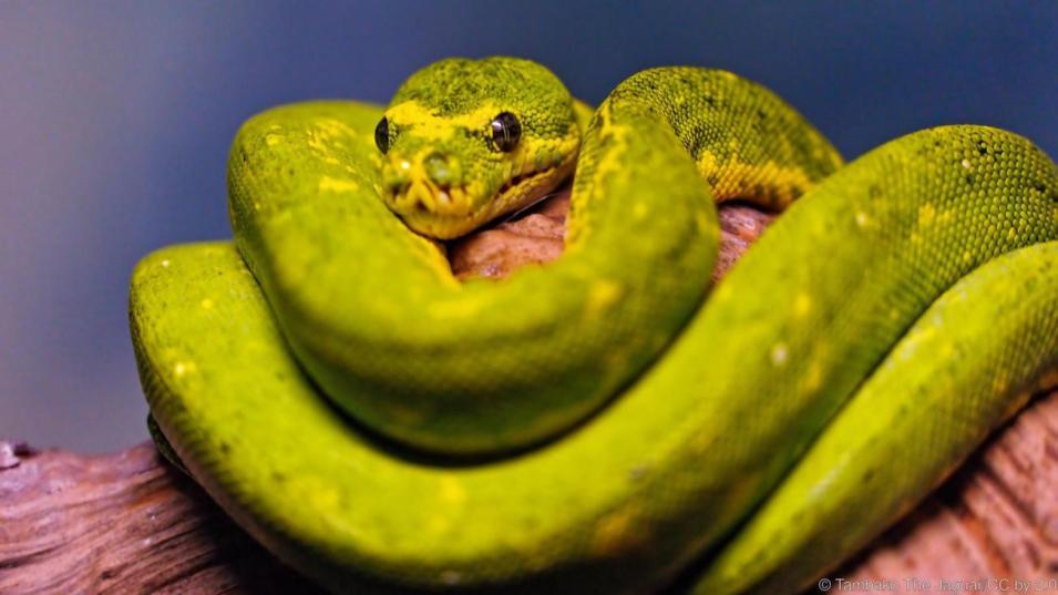 بعض الثعابين لطيفة جداً