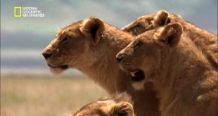 المفترسات HD : أقوى الحيوانات المفترسة - قتلة الحيوانات