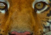 صورة خفايا البراري الهندية HD : غابات النمور