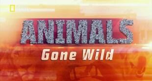 حيوانات باتت جامحة HD : سلوك غير منضبط