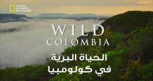 الحياة البرية في كولومبيا HD : الساحل البري في شوكو كولومبيا