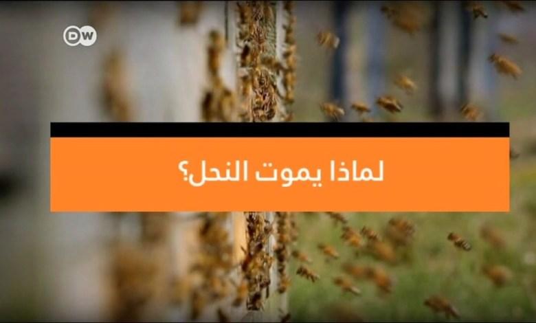 وثائقي - لماذا يموت النحل ؟