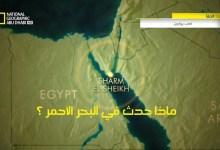 صورة خاص القروش HD : ماذا حدث في البحر الأحمر ؟