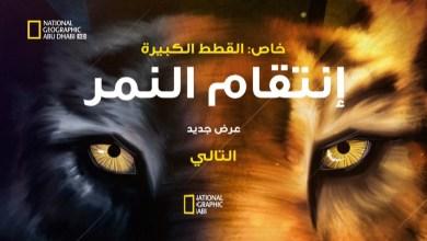 خاص : القطط الكبيرة – إنتقام النمر HD