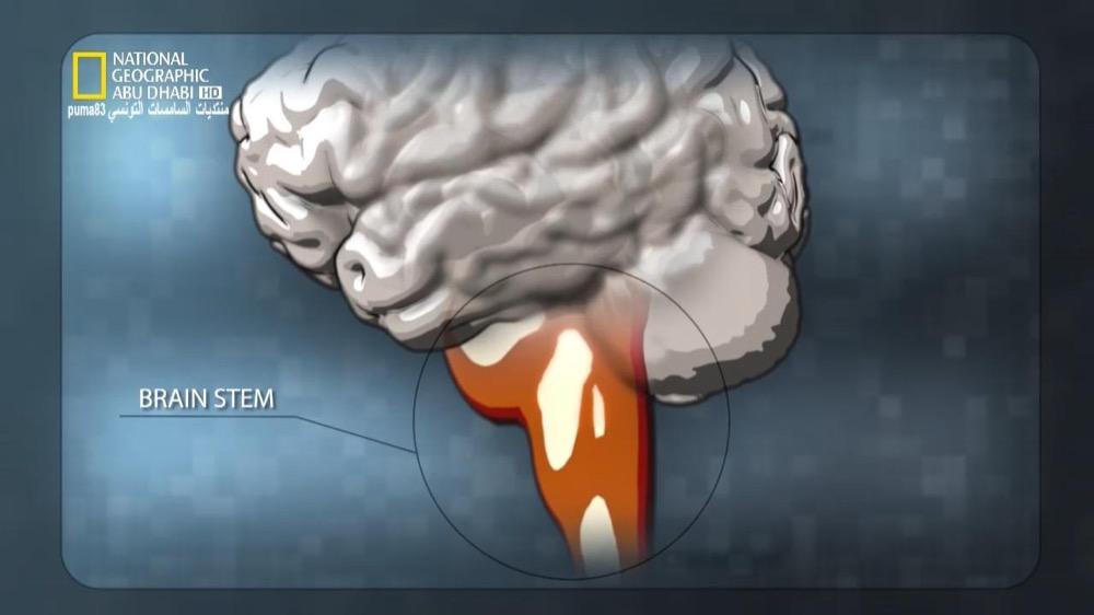 ألعاب العقل HD : تعرفوا على العقل - موقع علوم العرب