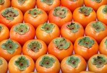 صورة مقال – الكاكي..فاكهة لذيذة وفوائدها الصحية كثيرة