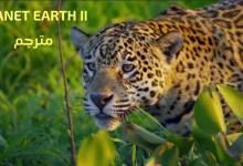 صورة مترجم – كوكب الأرض الموسم الثاني : ح1 الجزر
