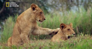 إعادة الحياة لمملكة إفريقيا البرية HD – الحلقة 3