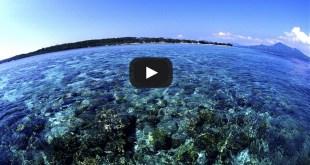 مترجم – كوكب الأرض الجزء الأوّل : ح9 البحار الضحلة