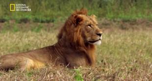 إعادة الحياة لمملكة إفريقيا البرية HD - الحلقة 1