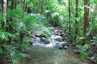 مترجم – كوكب الأرض الجزء الأوّل : ح10 الغابات الموسمية
