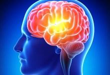 صورة مقال – أغذية تساعد على تقوية الذاكرة