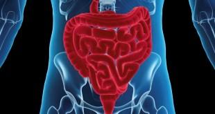 مقال – 5 نصائح مهمة لتحسين عملية الهضم