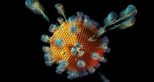 مقال - ما هو الفرق بين الفيروس والبكتيريا؟