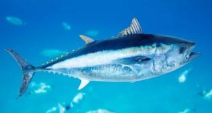 مقال – هل يشعر السمك بالعطش؟!
