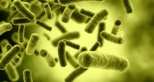 مقتطف - ما فائدة الجراثيم في الجسم؟