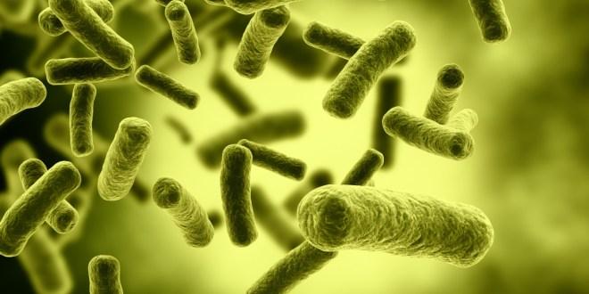 مقتطف – ما فائدة الجراثيم في الجسم؟