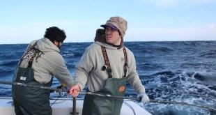 سمكة التونة العنيدة : الشمال VS. الجنوب – الزعانف الداعمة / موسم 2 ح3