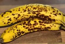 """مقال ماذا يحدث للجسم عند تناول """"الموز الأسود""""؟"""