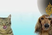 قطط و كلاب أيّهما أفضل ؟ ج2 و الأخير