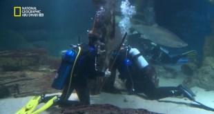 المهن الخطيرة ح4 : تنظيف حوض القرش