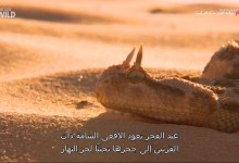صورة مترجم – وجهات برية : في الصحراء الكبرى مصر وسيناء