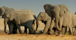 عجائب أفريقيا - قارة المتناقضات