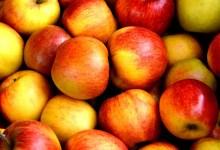 مقال – ما تأثير تناول التفاح يومياً على صحتك؟
