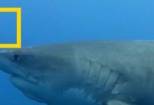 صورة عندما تهاجم أسماك القرش – في المياه الضحلة