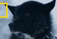 البراري الشمالية : أرض الثلج والجليد