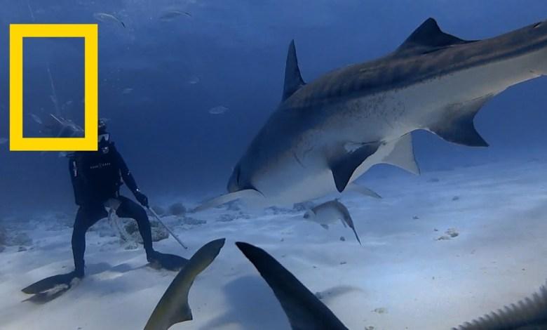شهود عيان : هجمة القرش