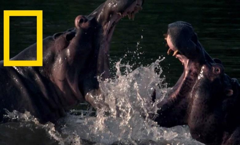 أشرس الكائنات في العالم : أنهار الموت