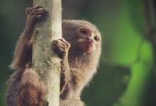 صورة عين على فردوس الأمازون