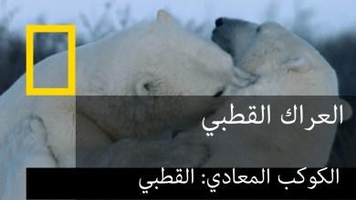 الكوكب المعادي : القطبي