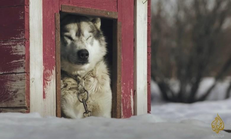 نحن و الكلاب.. سر صداقتنا