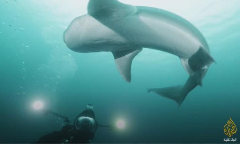 وحوش المحيطات : حيتان الأوركا