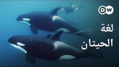 لغة الحيتان