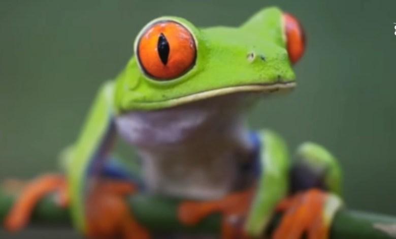 براري كوستاريكا - أرض الغابات المطيرة الاستوائية